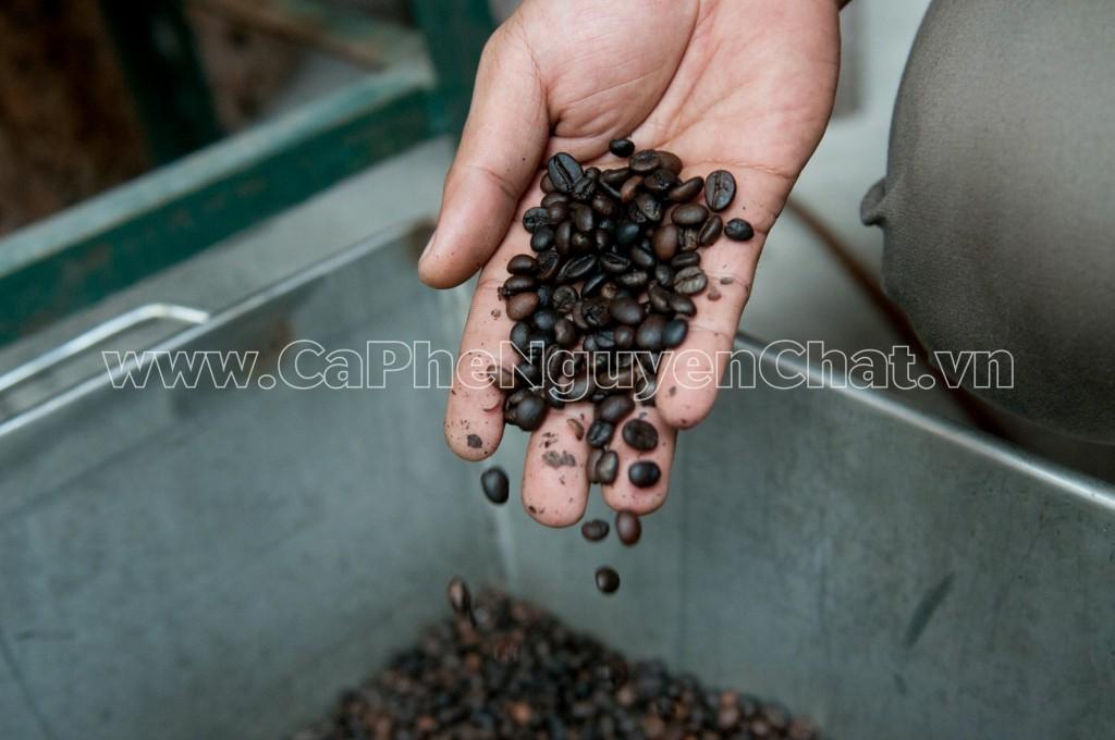 Cà phê hạt mua ở đâu