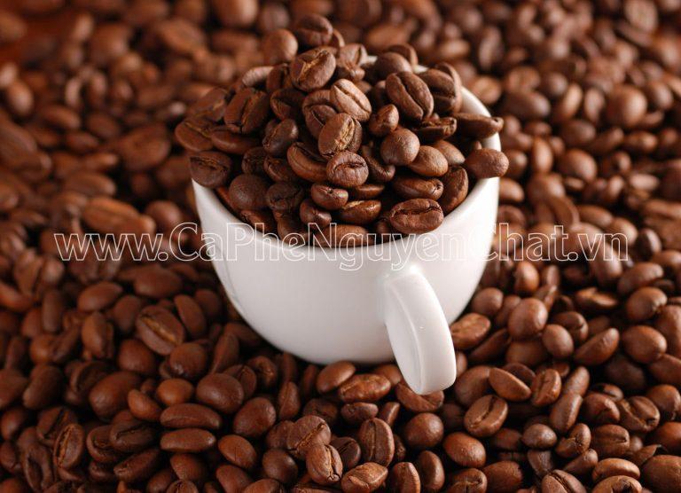 Giá cafe hạt nguyên chất khoảng bao nhiêu?