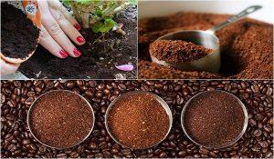 Hướng dẫn bảo quản bã cà phê
